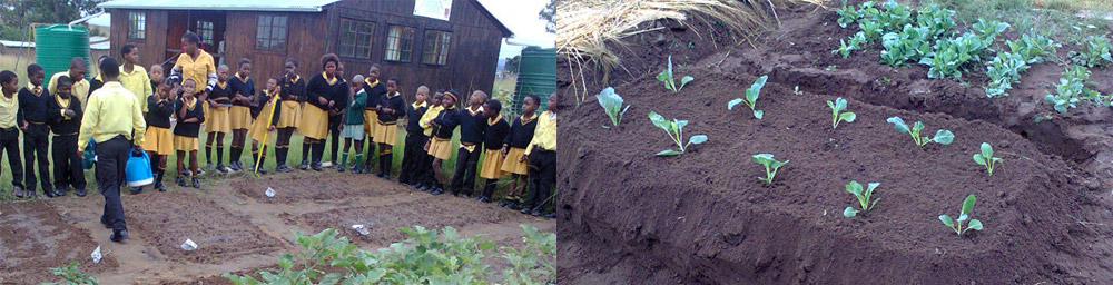 Entretien des jardins par les enfants.