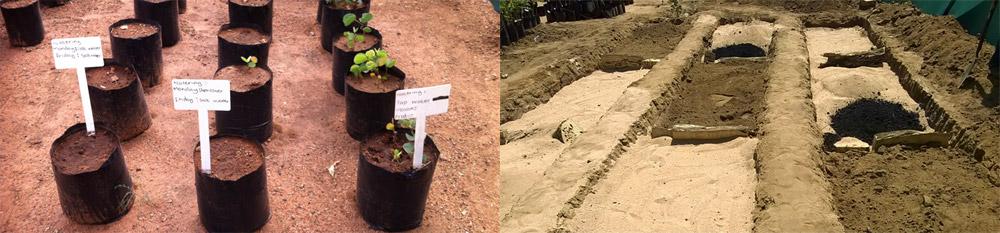 Plants dans la serre de MAUN et lits de cultures préparés avec différents types de sol et de biochar.